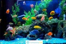 Cẩm nang chọn vị trí đặt bể cá phong thủy trong nhà