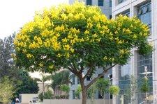 6 loại cây phong thủy trồng trước nhà